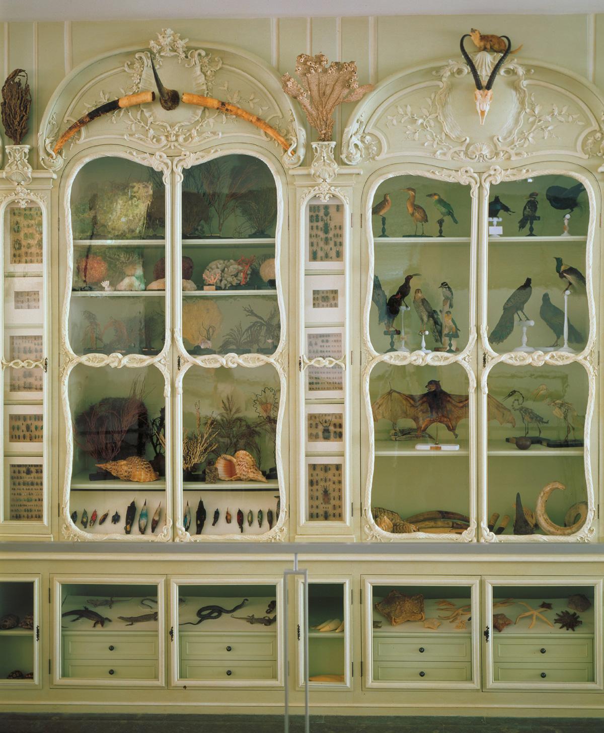 Bonnier De La Mossonu0027s Second Cabinet Of Natural History As It Stands  Today. Courtesy Bibliotèque Centrale Du Muséum National Du0027Histoire  Naturelle, Paris.
