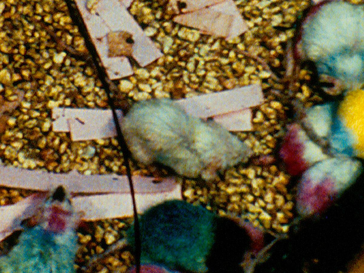 Mouse utopia experiment